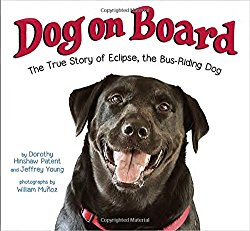 """Dog on Board"" Here's Eclipse's Story!"
